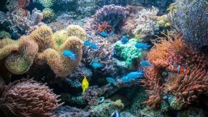 Boron - Reef Protection