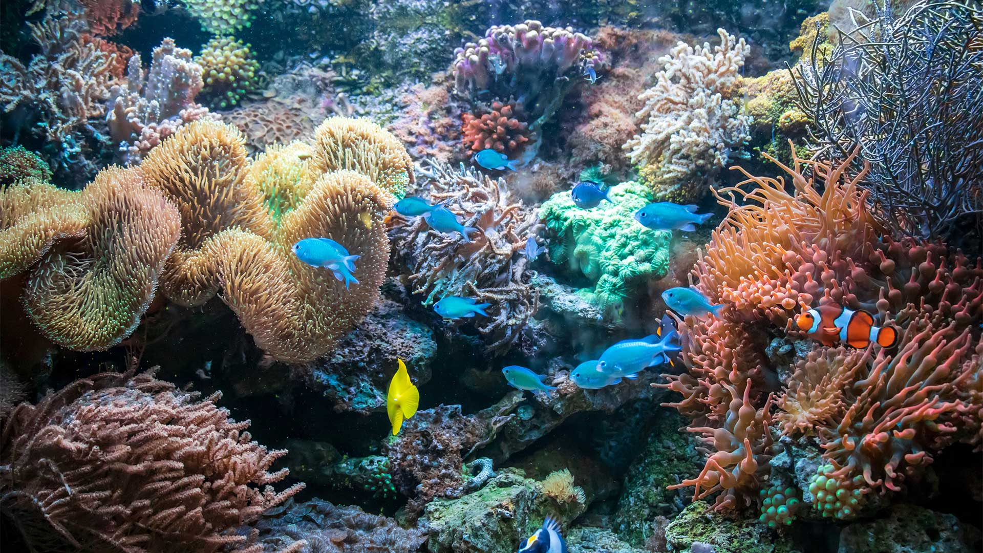 Boron's Importance in Maintaining the Health of Coral Reefs