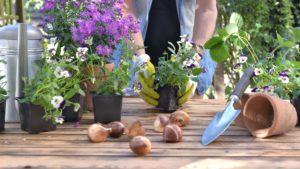 Boron for plants - Gardening