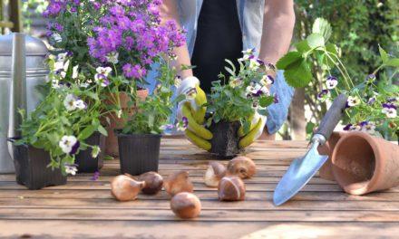 How Boron Helps Your Garden Thrive