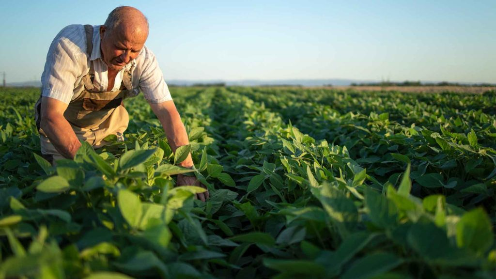 Boron - Agriculture