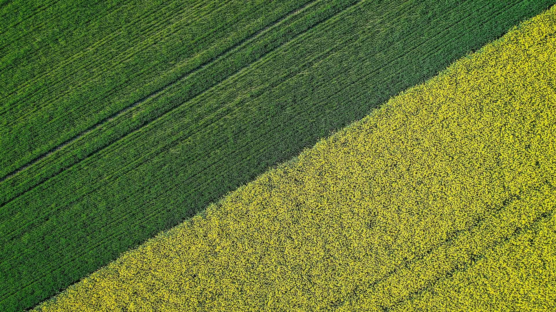 Crop Management – How Boron Promotes Food Availability