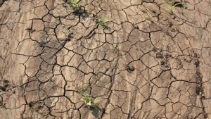 Boron - Food Security