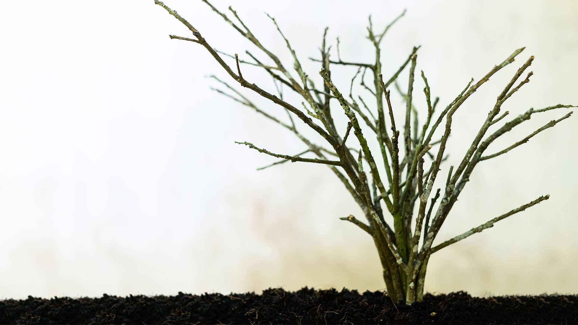 Ensuring Micronutrient Boron Supply