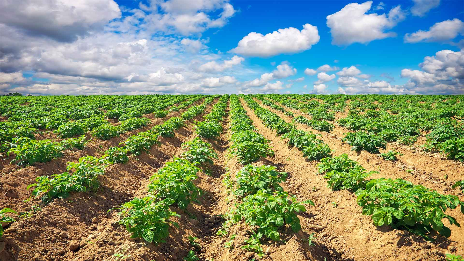 Boron and Borates Provide Stability for Food Security